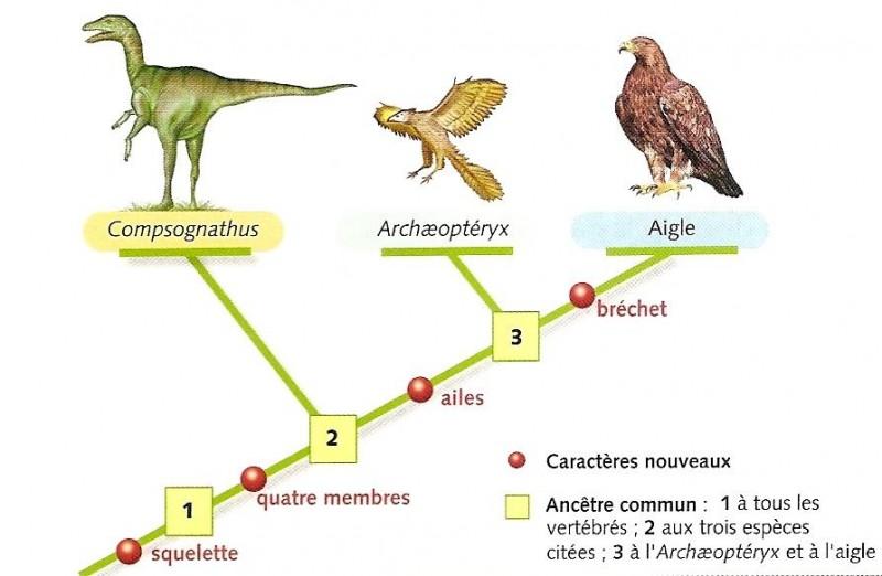arguments arguments arguments arguments arguments arguments arguments - Resume Cours Science Bac Tunisie