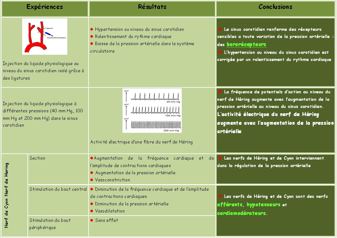 système sympathique pdf